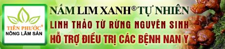 Nấm lim xanh Tiên Phước © Tác dụng cách dùng nấm lim Quảng Nam
