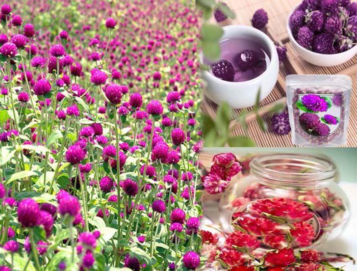 Cách dùng hoa bách nhật hồng