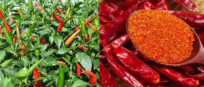 Cách dùng quả ớt