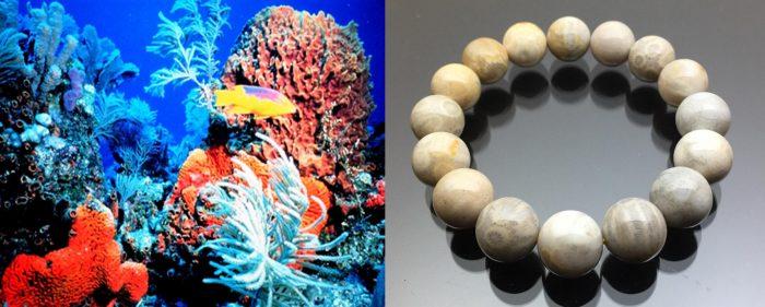 Cách dùng san hô
