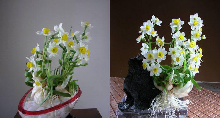 Giá cây hoa thủy tiên