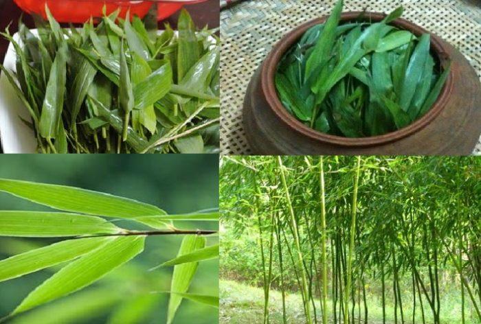 Giá lá tre trên thị trường Việt Nam