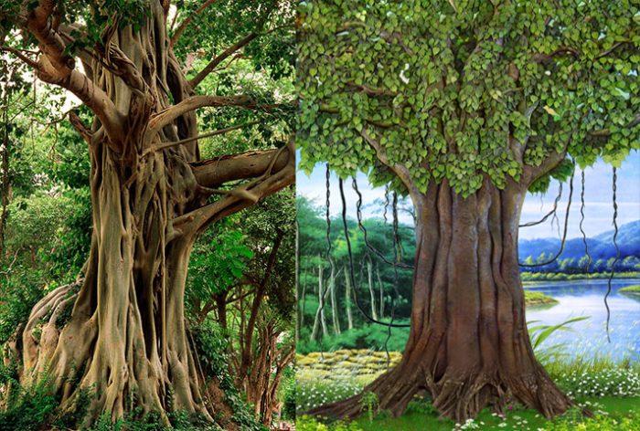 Hình ảnh cây bồ đề