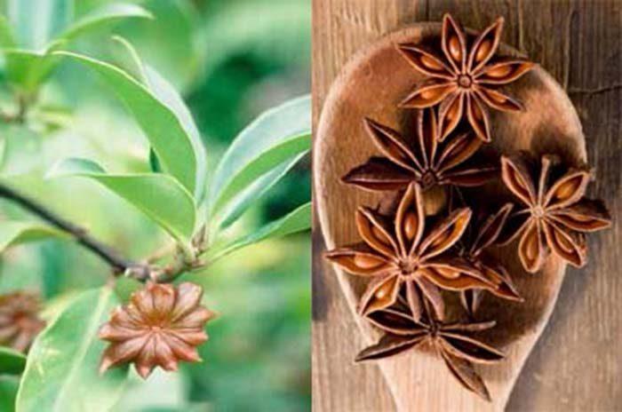 Hình ảnh hoa hồi