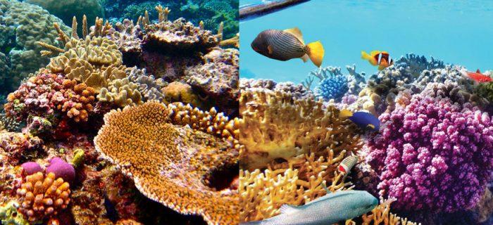 Hình ảnh san hô