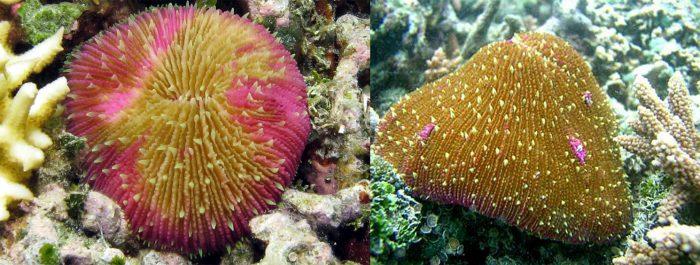 Lưu ý khi sử dụng san hô