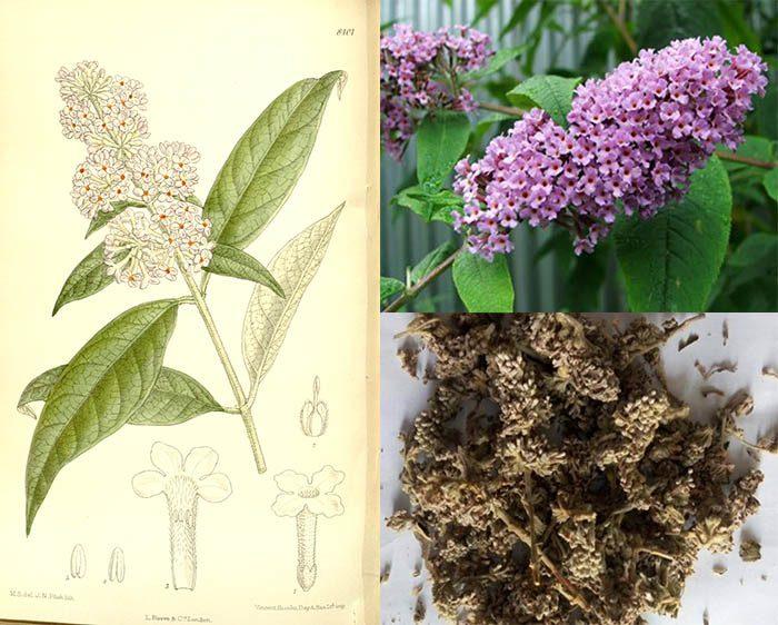 Tác dụng của mật mông hoa là gì và cách dùng mật mông hoa như thế nào