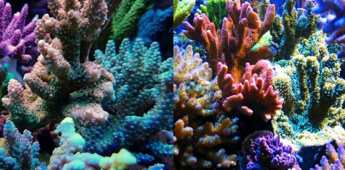 Tác dụng của san hô là gì cách dùng cũng như lưu ý khi sử dụng san hô