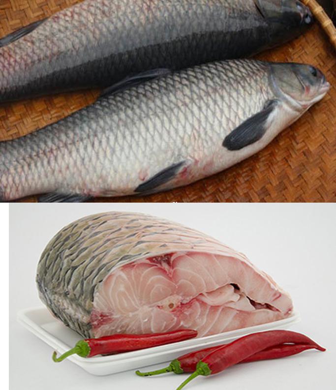 Tác dụng của cá trắm