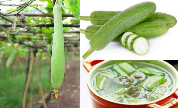 Tác dụng của mướp hương giúp chữa bệnh hiệu quả