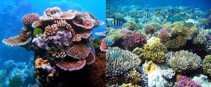 Tác dụng của san hô