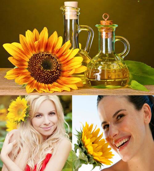 Tác dụng và cách dùng dầu hoa hướng dương