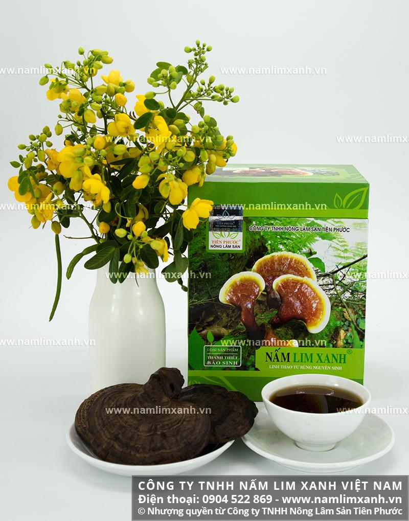Giá nấm lim xanh rừng tự nhiên Tiên Phước Quảng Nam Thanh Thiết Bảo Sinh
