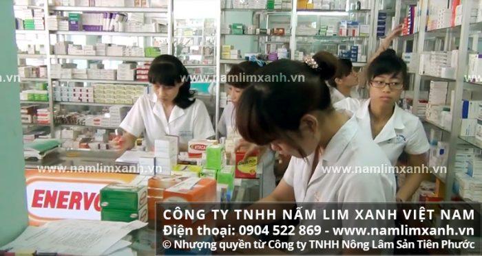Địa chỉ bán nấm lim xanh rừng tự nhiên của Công ty TNHH Nấm lim xanh Việt Nam tại Khánh Hòa