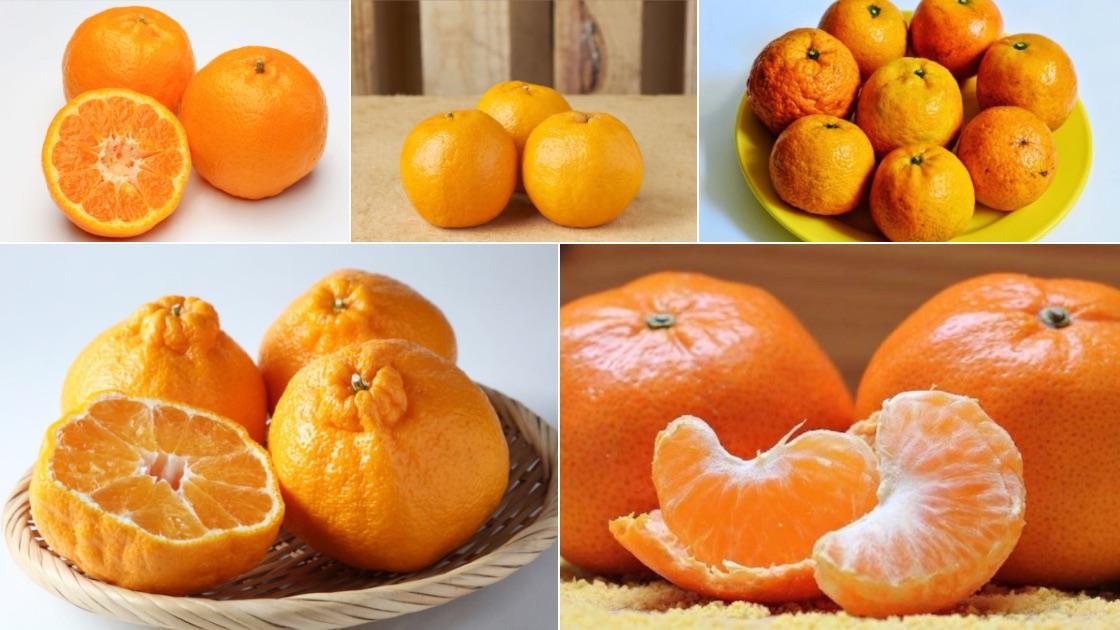 Trong các loại trái cây họ cam, quýt chứa nhiều vitamin tăng sức đề kháng