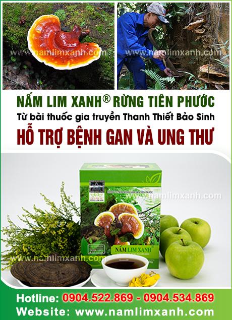 Nấm lim xanh rừng với cách dùng và tác dụng của nấm lim xanh rừng
