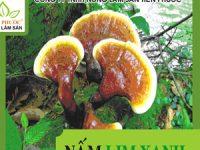 Nấm lim xanh gia truyền THANH THIẾT BẢO SINH