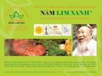 Nấm lim xanh tự nhiên LOẠI NGUYÊN CÂY